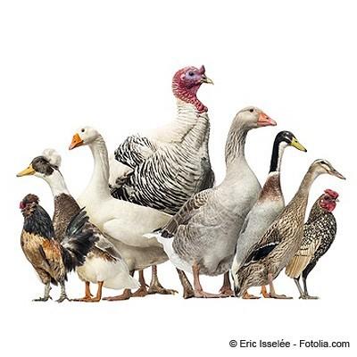 Animaux de la ferme croq85 - Images d animaux de la ferme ...