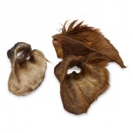 Oreille de Boeuf avec Poils